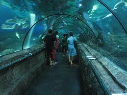 Seaworld Indonesia - Taman impian Jaya Ancol