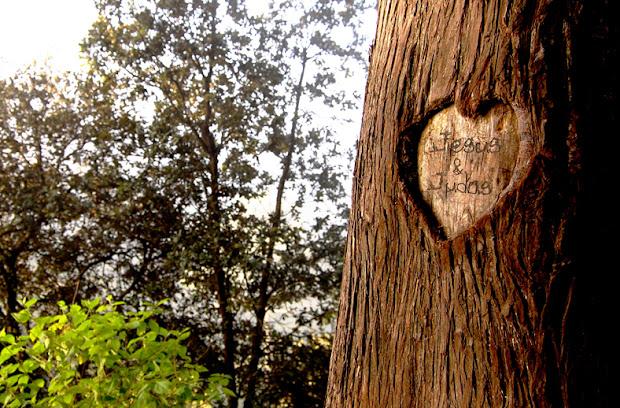 Corazon tallado en arbol viejo, donde Jesus y Judas Iscariote se juraron amor eterno | Ximinia