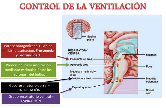 Sistema Respiratorio | Sistemas del Cuerpo Humano