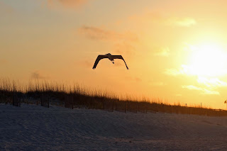 Blue Heron flies over Pensacola Beach during Sunrise