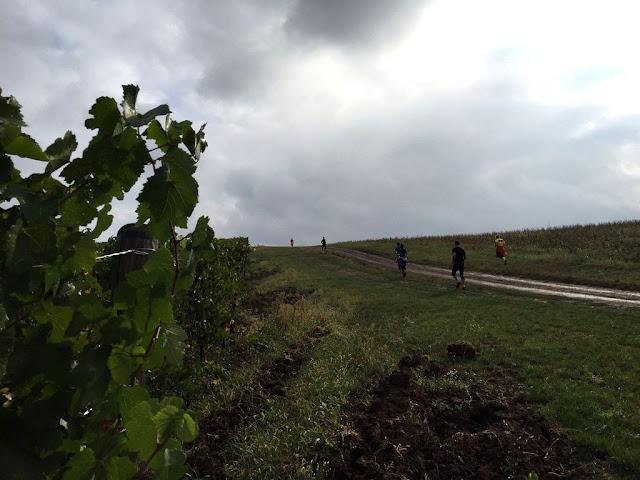 La Petrovaselo în Vie, invie alergarea prin natură. Trail Run Petrovaselo. 24 octombrie 2015. Florin Chindea Maseur Oficial al evenimentului