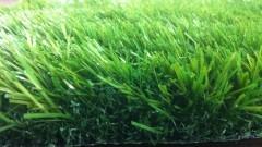 דשא סינטטי מבית הולי אינטרנציונל
