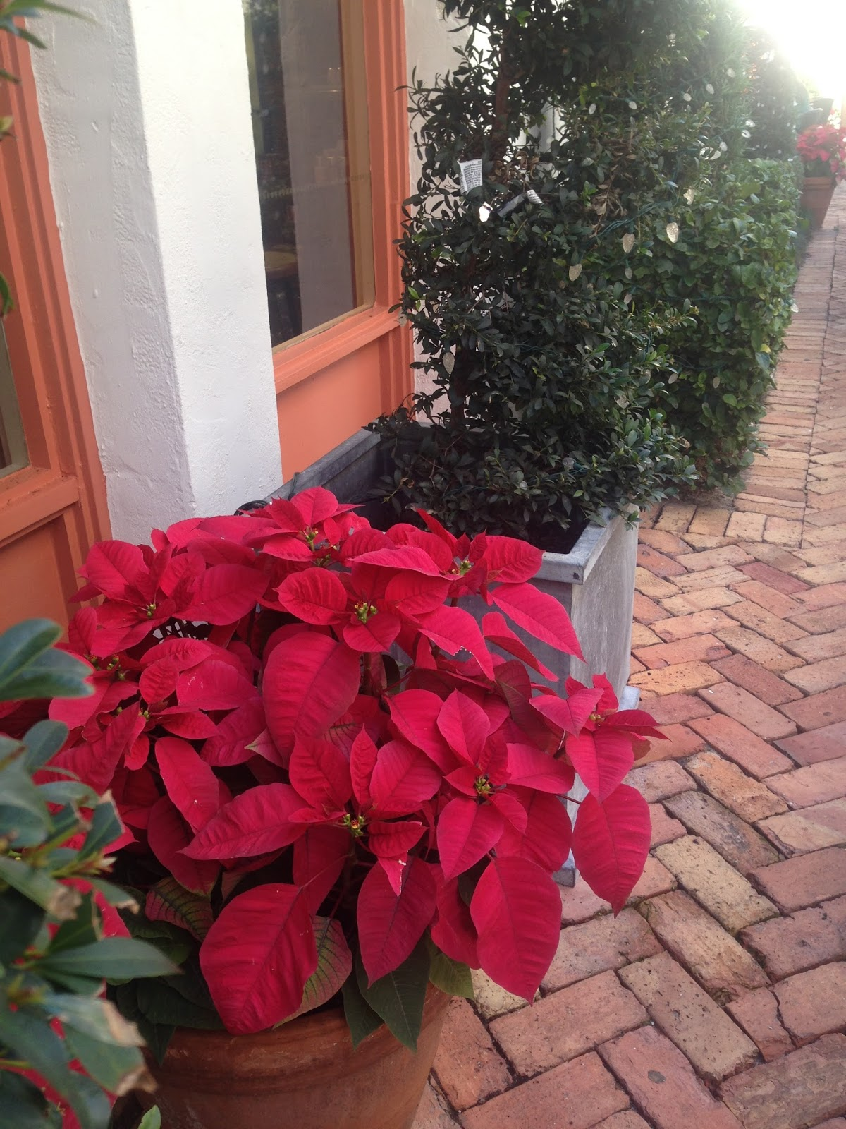 Amys Creative Pursuits Fall Flowers In Winter Park Florida
