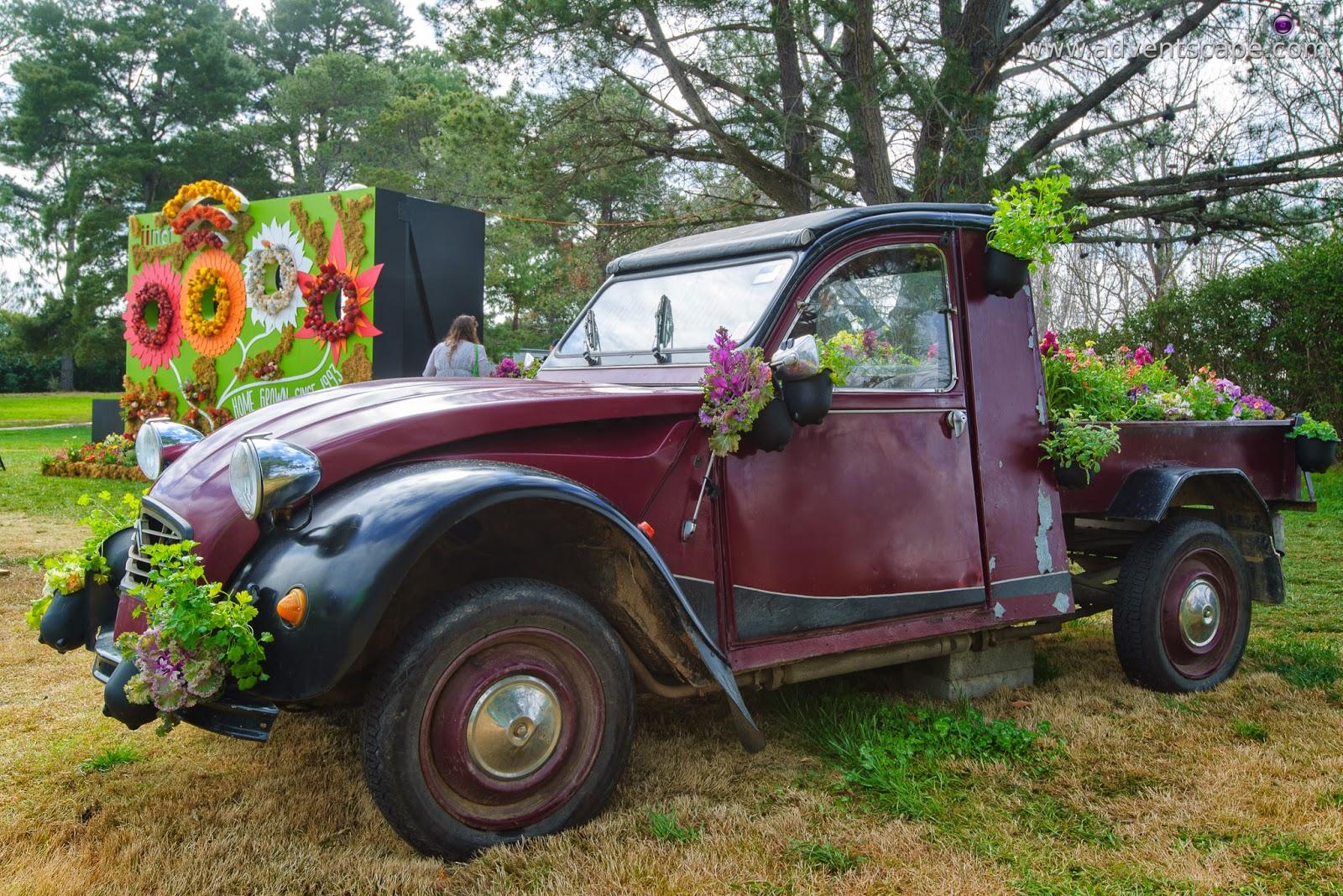 Philip Avellana, iori, advenscape, Floriade, 2014, spring festival, Canberra, ACT, Australian Capital Territory, park, flowers, blossom, car flower