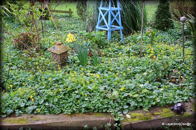 Le jardin d 39 oscar les invasives du jardin for Le jardin qui dit non