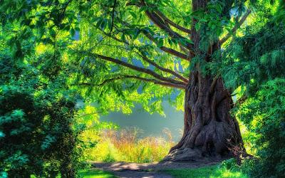La inigualable belleza y perfección de la naturaleza