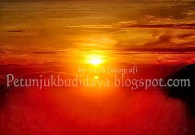 SUNRISE DI SIKUNIR DIENG PLATEAU