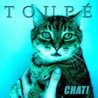 Toupé: Chat!