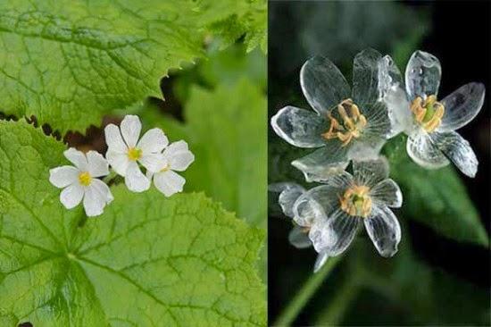 صورة للزهور وهي بيضاء وشفافة