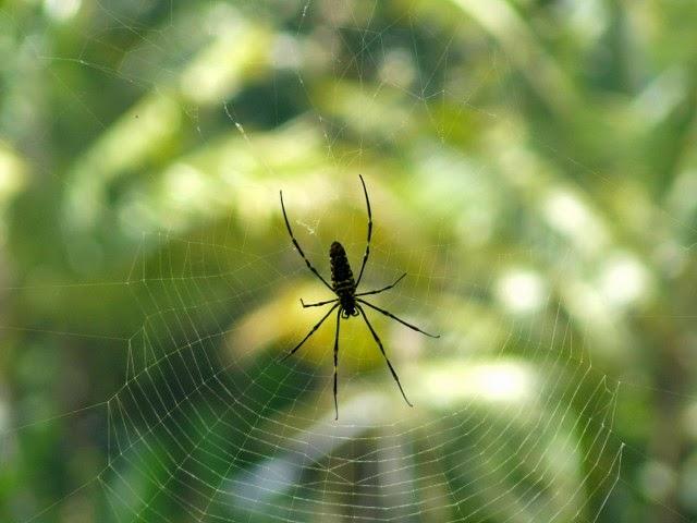 arañas, bichos, insectos, ubud, bali