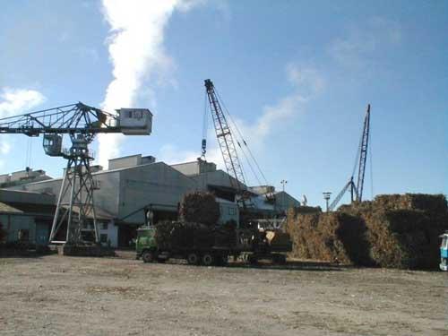 Ingenio Bermejo solo procesa el 10% de la cosecha