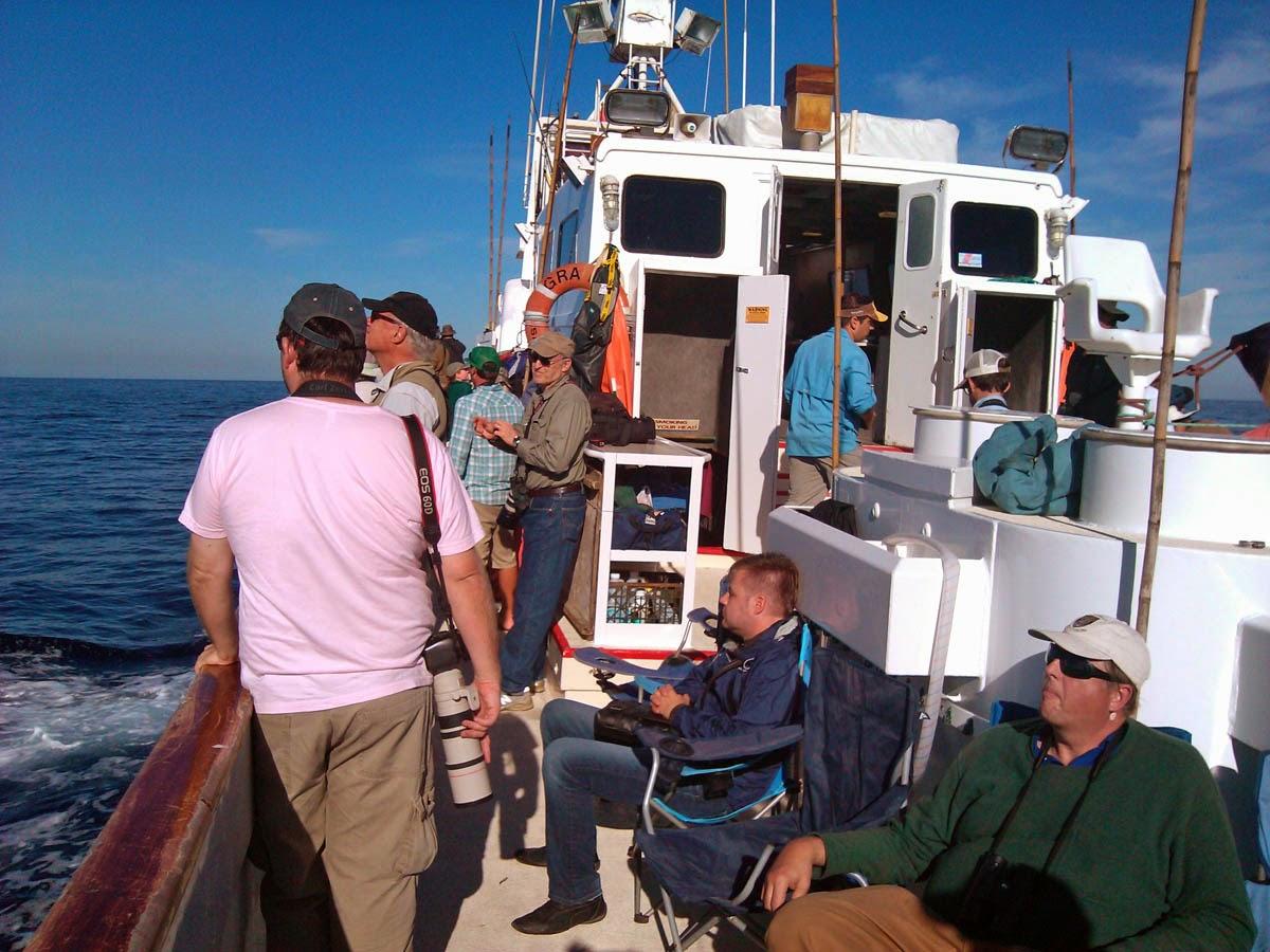 Pelagic trip aboard Grande