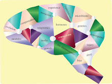 Identità sessuale e neuroscienze