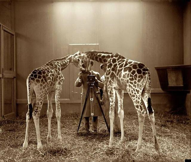 Brilliant Photos