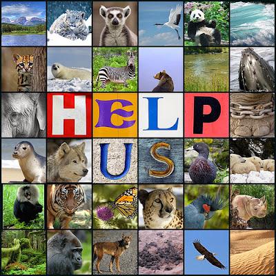 help_us_pic._.jpg