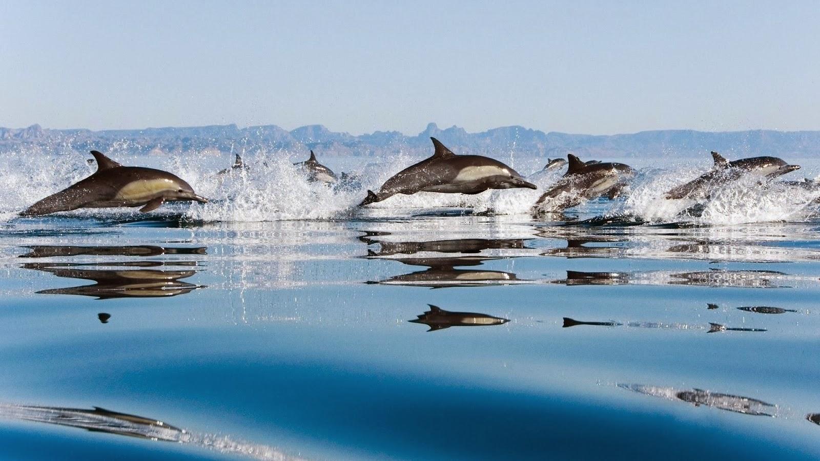 dolphin in sea