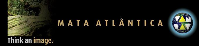 mata atlântica van ray