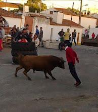 Fotos Selmes 2013