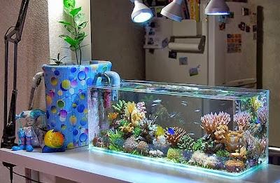 Pembersihan Akuarium Ikan Cupang