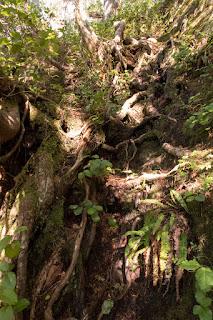 Mackenzie Peak, Alberni-Valley Vancouver Island. Photograph by Matthew Lettington