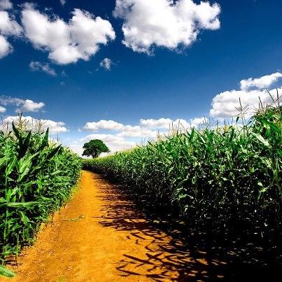 Corn-Farmer-Story
