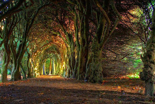 Yew Tree Tunnel, Inggris