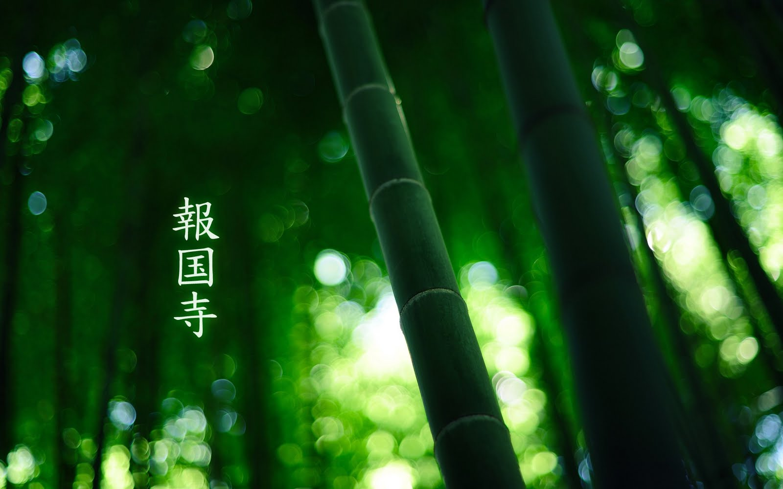 wallpaper bamboo on Posted In Background Bamboo Green Hd Nature Plant Trees Wallpaper