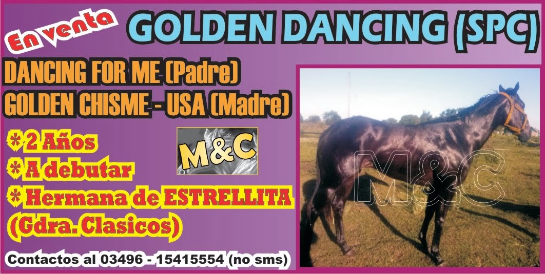 GOLDEN DANCING - 01/12/14