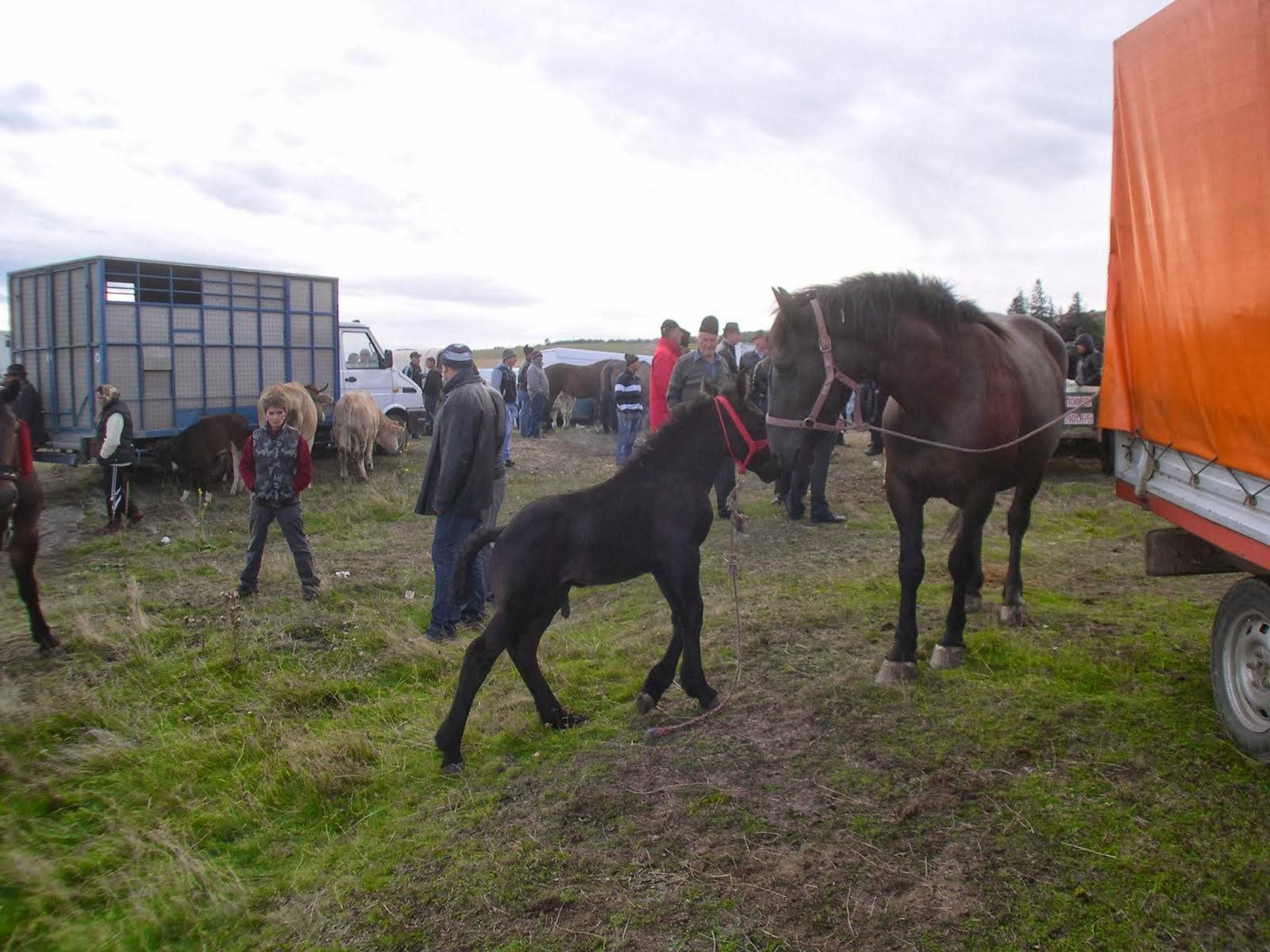 Animal fair 23