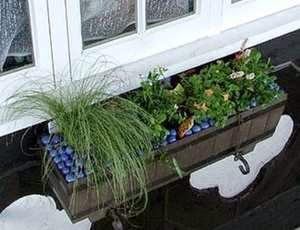 Grow a Window Box Salad Garden