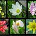 PLANTAS NATIVAS: Cultivo, reconocimiento y diseño