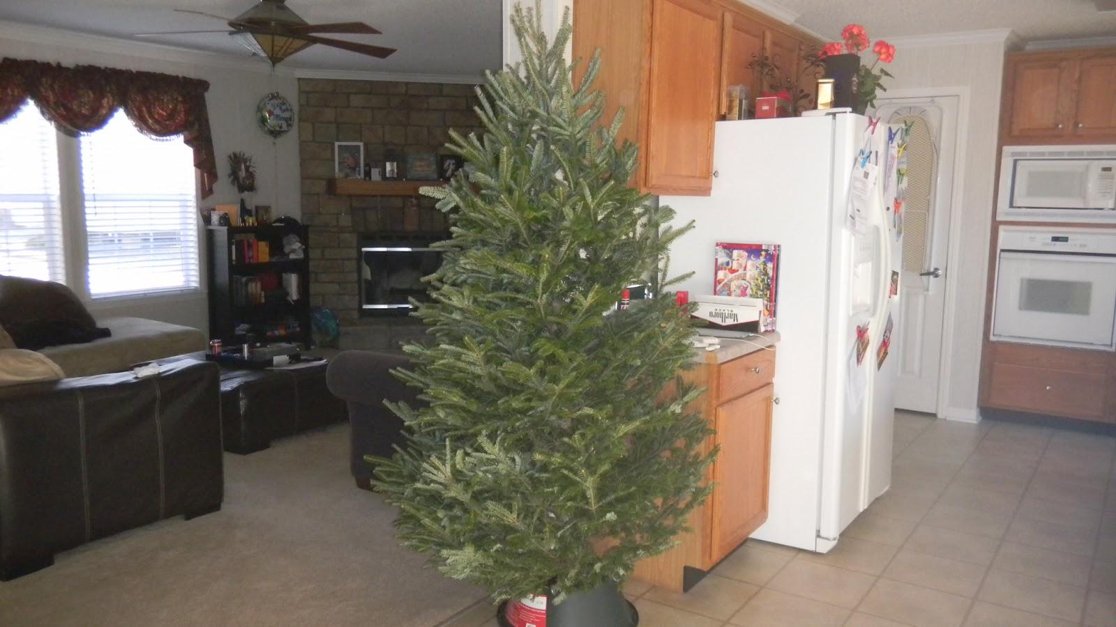 Our new life in the us unser amerikanischer for Amerikanischer weihnachtsbaum