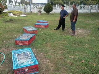 Kursus Sembelihan Halal