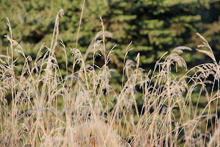 Autumn's grass seed heads