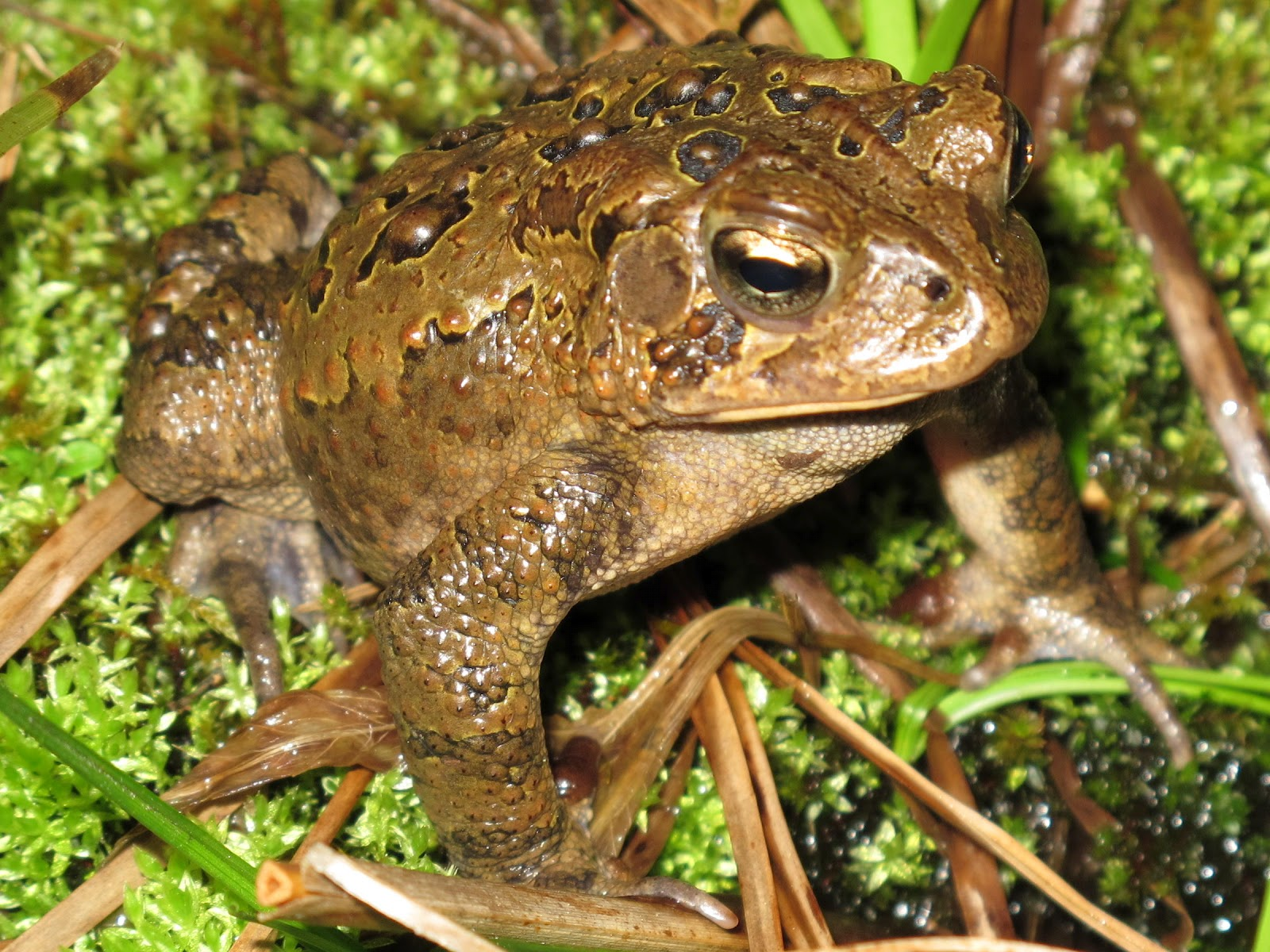 how to get rid of toads in my pond