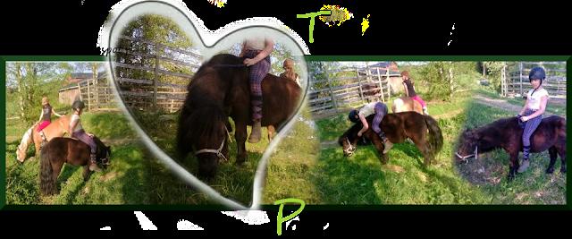 Täydellistä ponielämää