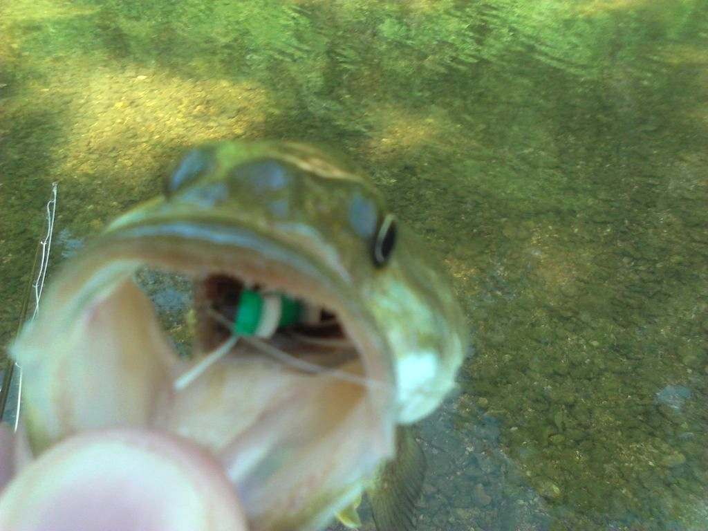 Buggin 39 out fishing the lies fly fishing for for How to fly fish for bass