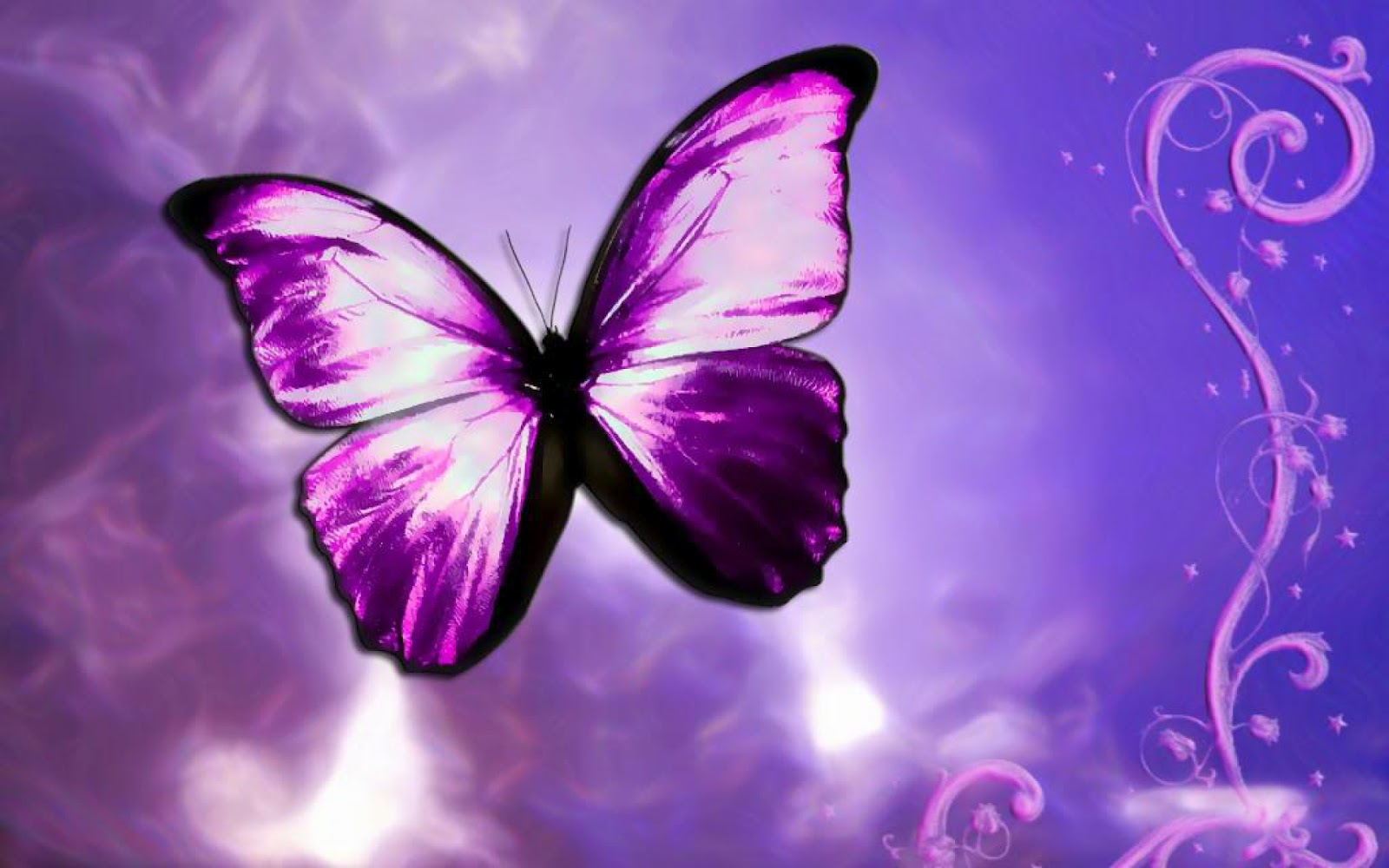 latest wallpapers of butterflies - photo #39