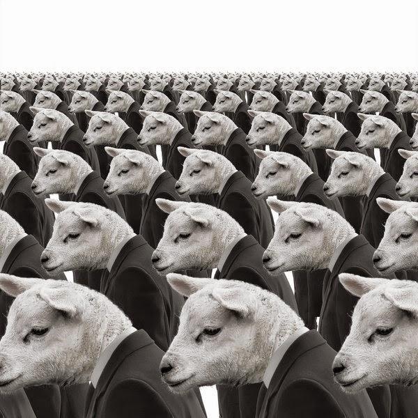 ct-prj-excellent-sheep-william-deresiewi