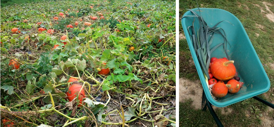 La triplette de lille la cueillette la ferme - Comment cueillir des fraises ...