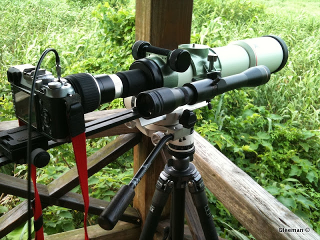 Digiscoping with Fujifilm X100 (Pentax 75SDHF)