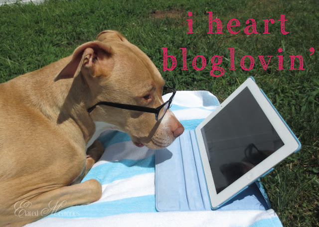 Bloglovin' Dog Elated Memories