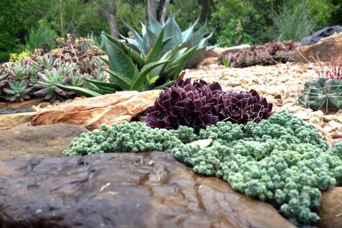 Combinar suculentas en el jard n guia de jardin for Jardines con gravilla de colores