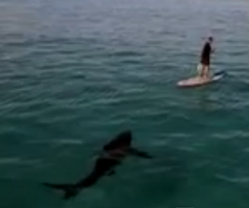 here a video filmed in south africa where shark expert chris fallows