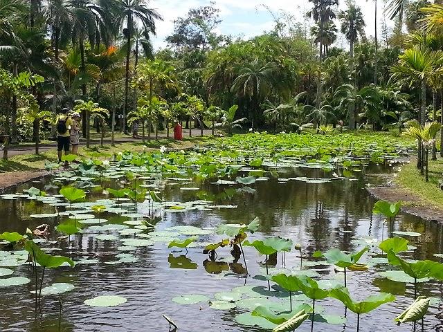 Mauritius - Lotuses
