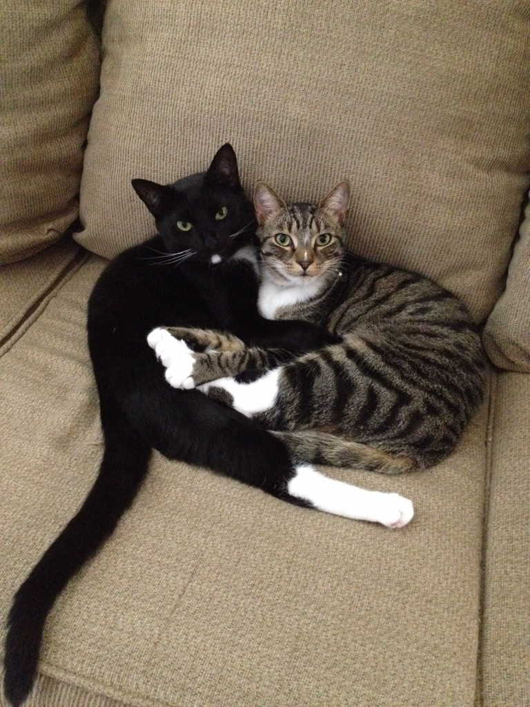 Funny cats - part 176, funny cat photo, best cat pictures, cute cats