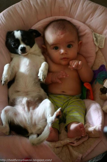 Funny dog and baby.