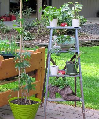 Eco friendly house plant stand plans in home - Ladder plant stand plans ...