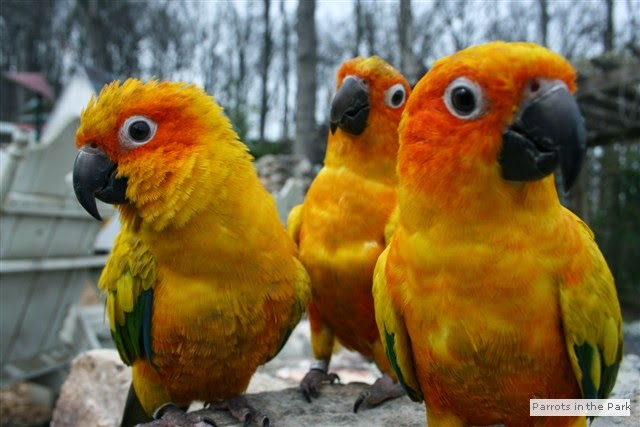 Baby macaws