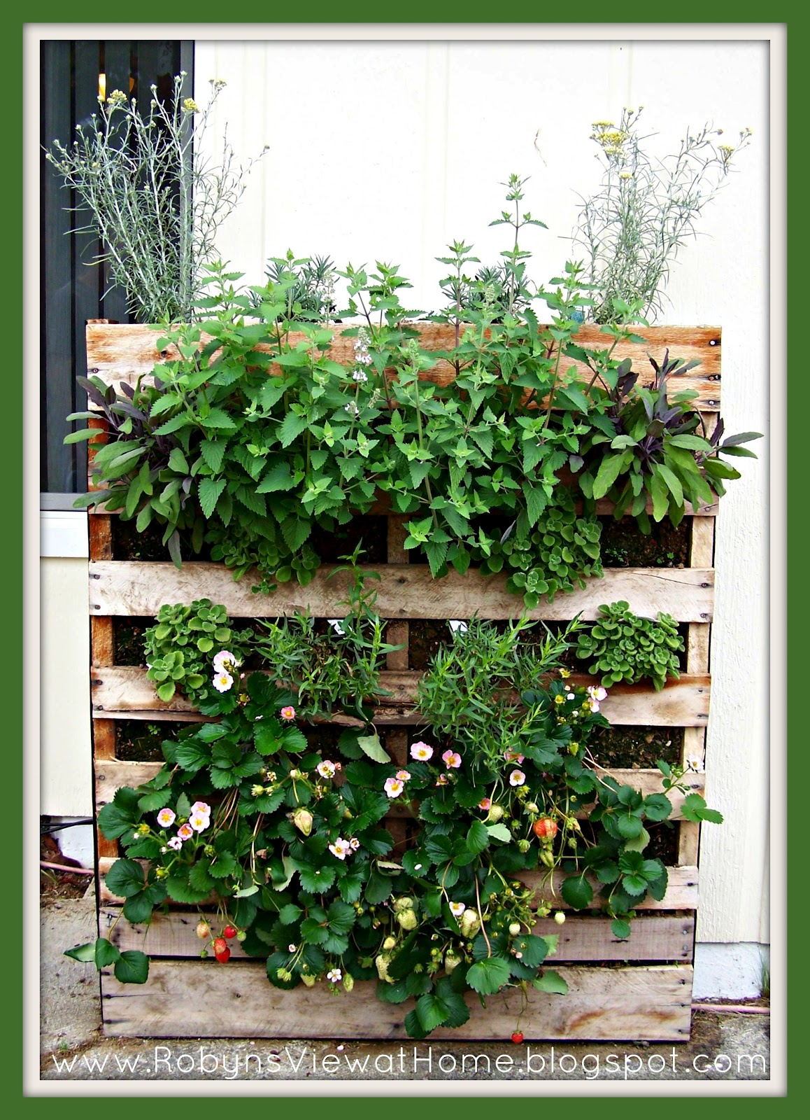 How Does Your Garden Grow Plus How to Make a Pallet Garden